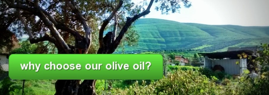 Galilee Green   Best Extra Virgin Olive Oil from Israel